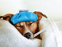 H3N2 Deadly Aussie Flu Hit, Are You Ready To Hygienic Precautions?